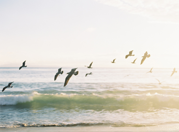 seagulls-flying-over-ocean-by-bryce-covey