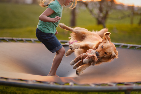 child and dog jumping on trampoline pic by Marci Bacho