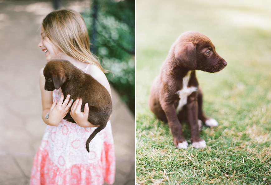 abbie mcfarland's images of puppy
