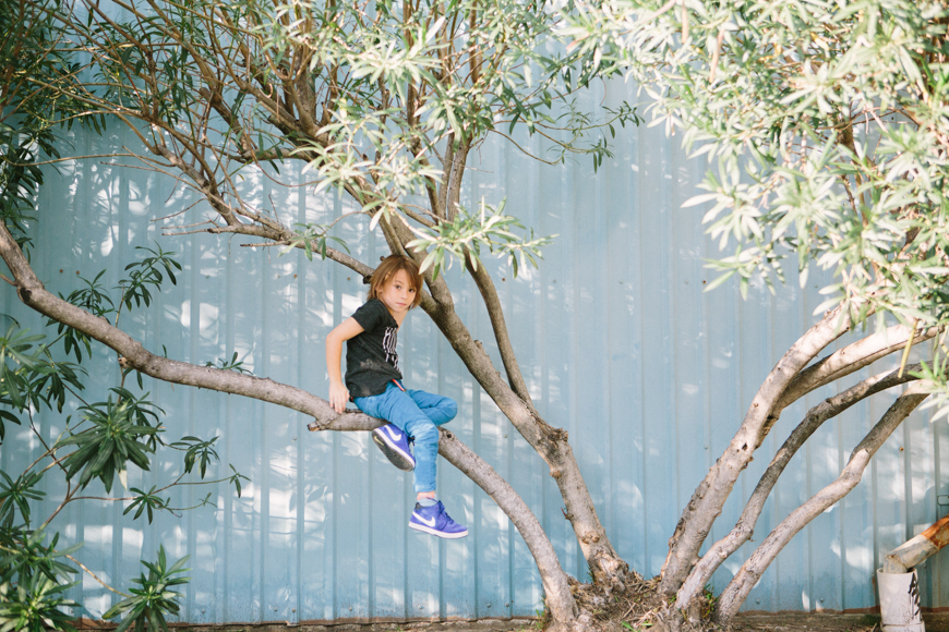 family photographer brooke schwab's photo of boy in tree