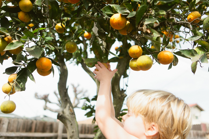 family photographer brooke schwab's photo of orange tree with boy
