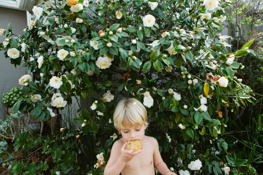 family photographer brooke schwab's photo on boy in bush