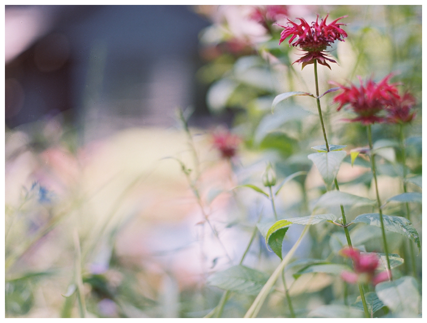 cool image of red flowers by nj family photographer sarah day boodhoo