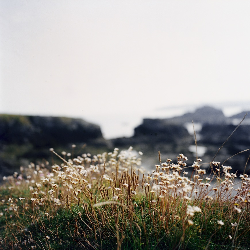 field flowers image in north wales by photographer lea jones