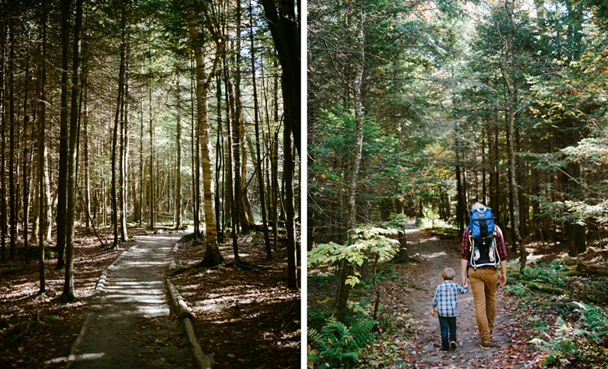 light filled forest with tall trees and family image by ash imagery.jpg