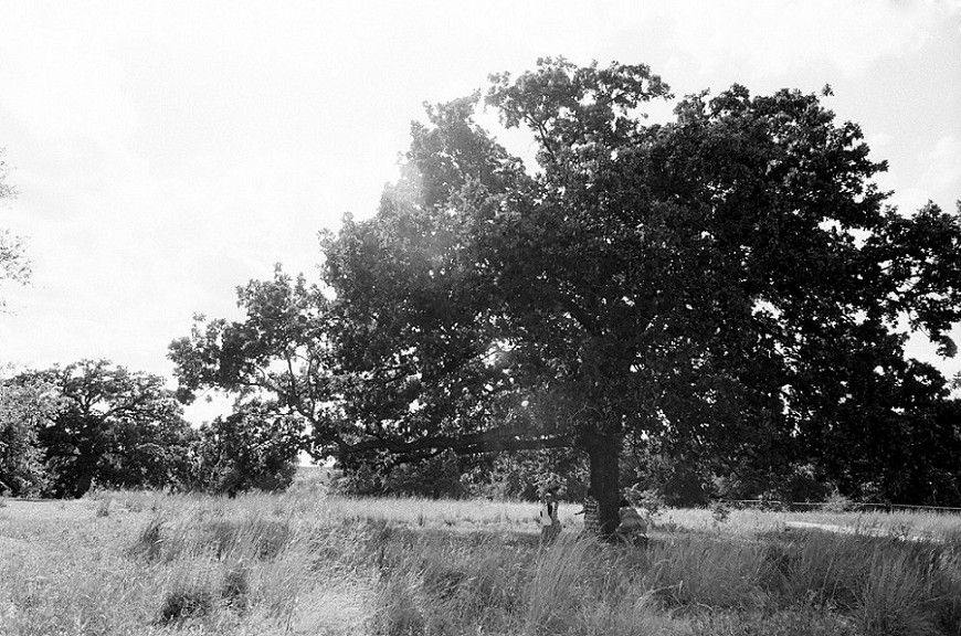 dallas photographer jenny mccann's black and white image of family under tree
