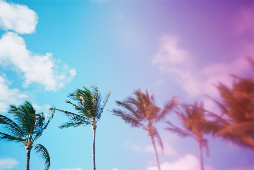 palm trees photo with pink overlay