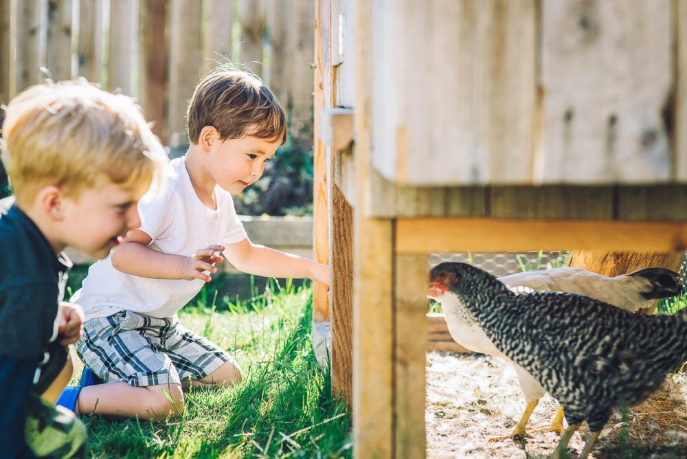 8 image of two young boys playing with a chicken by devon michelle