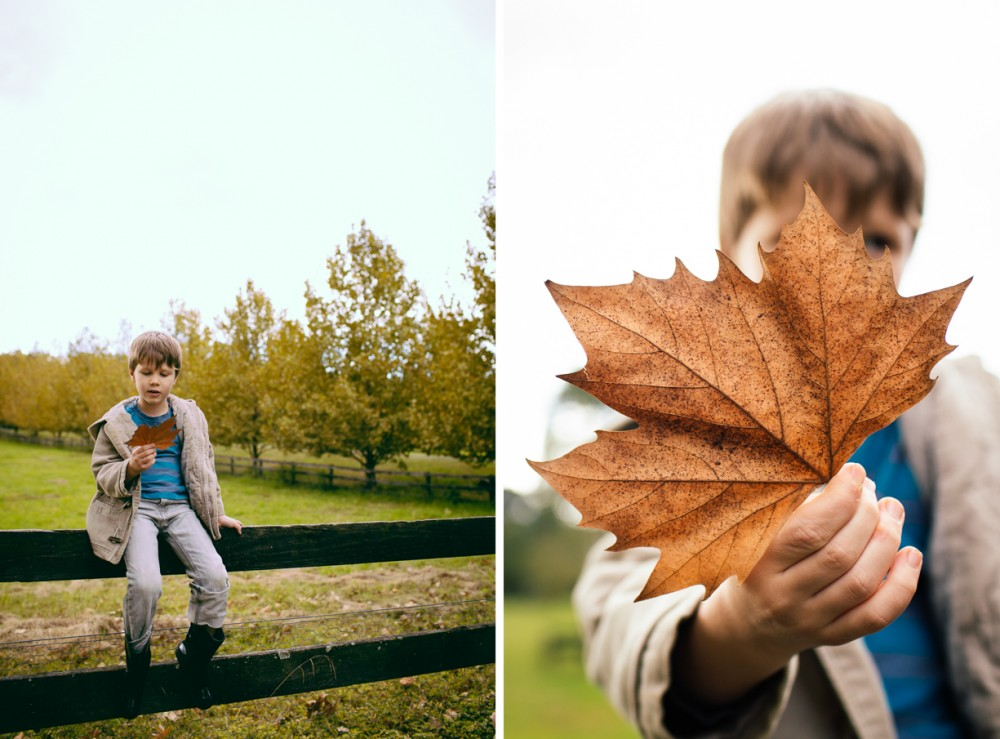 1 photo of boy sitting on a fence with leaf in fall by sheridan nilsson