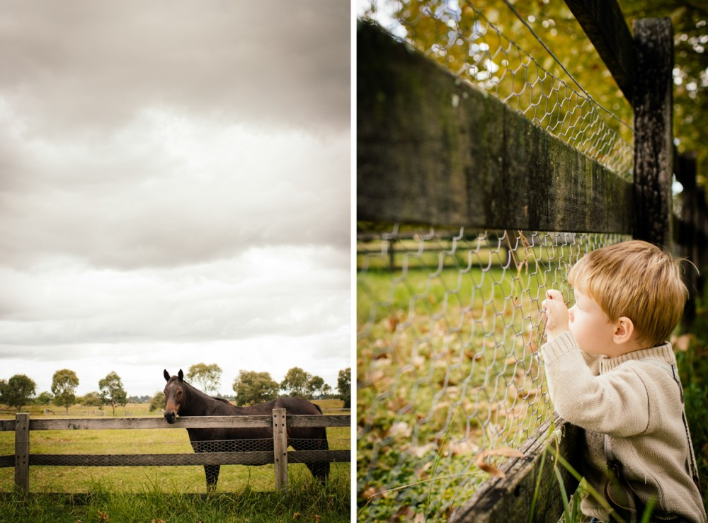 4 photo of little boy looking through fence at horse fall autumn by sheridan nilsson