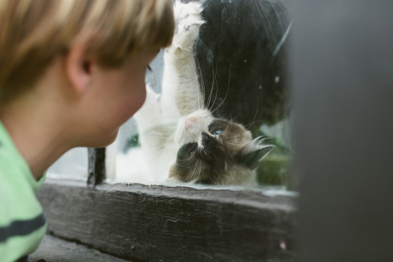 18 boy plays with cat in window by texas photographer brooke schwab