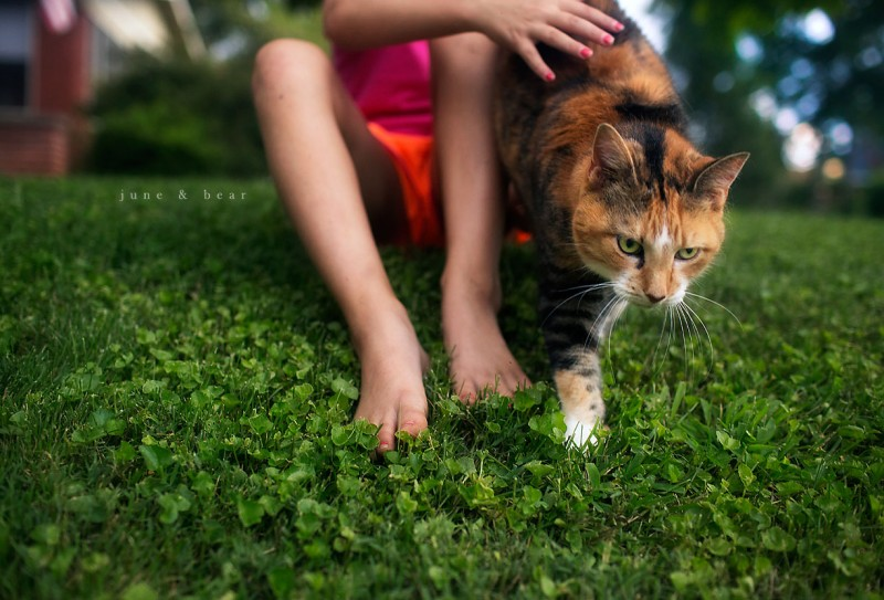 image of a girl petting a calico cat in grass by june & bear