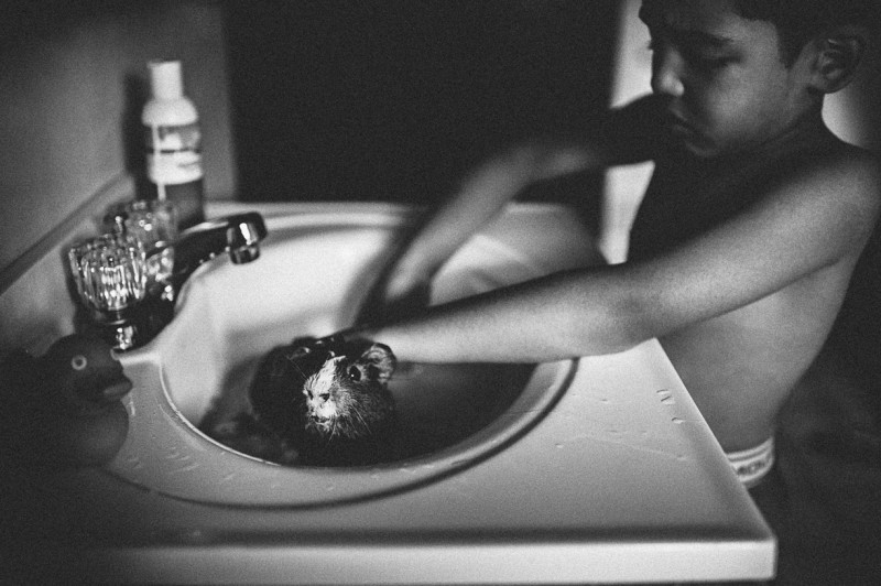 picture of young boy washing guinea pig in bathroom sink black and white by ana rosenberg