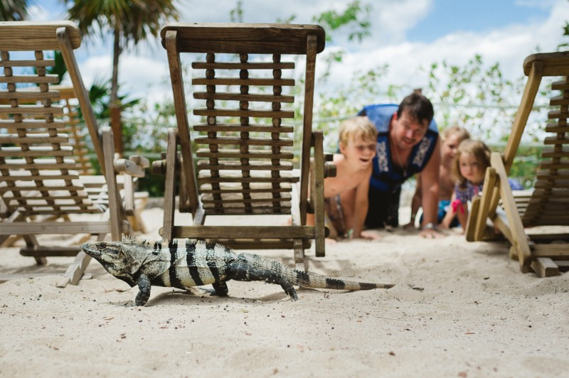 photograph of family on beach spying on iguana by erica montgomery