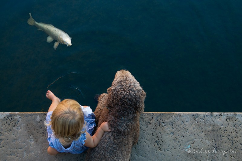 image of girl and dog on water edge with a koi fish looking at them by karlee hopper