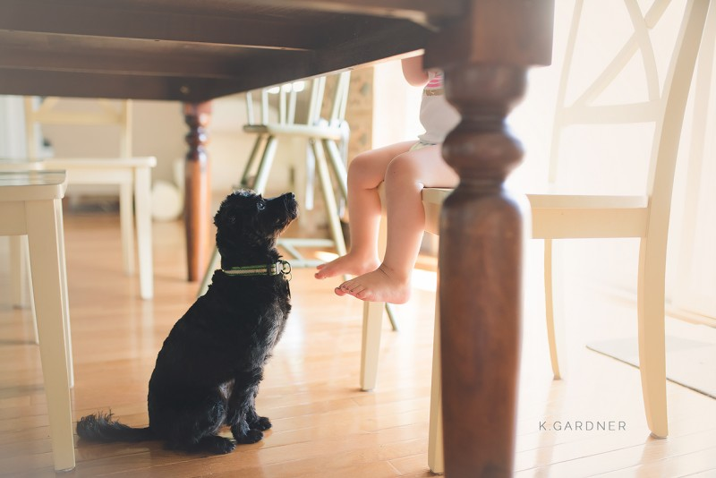 image of smalle black dog under table where toddler is eating waiting begging for food by katie gardner
