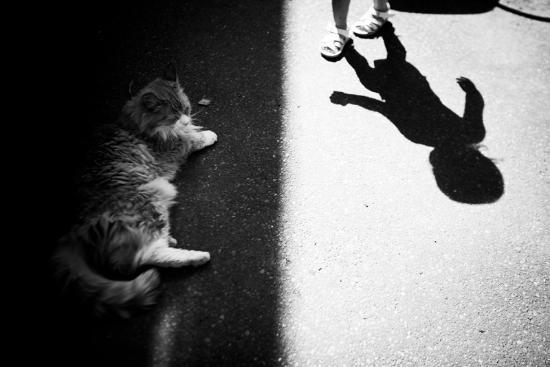 picture of cat in shade with shadow of approaching toddler girl by kristin hiatt