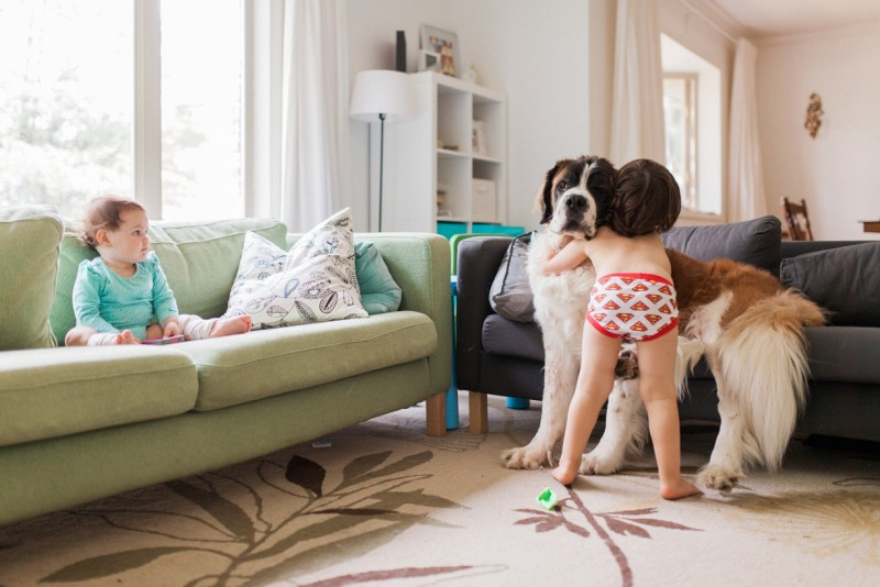 photo of boy in superman underwear hugging saint bernard in house with baby on couch by lacey monroe
