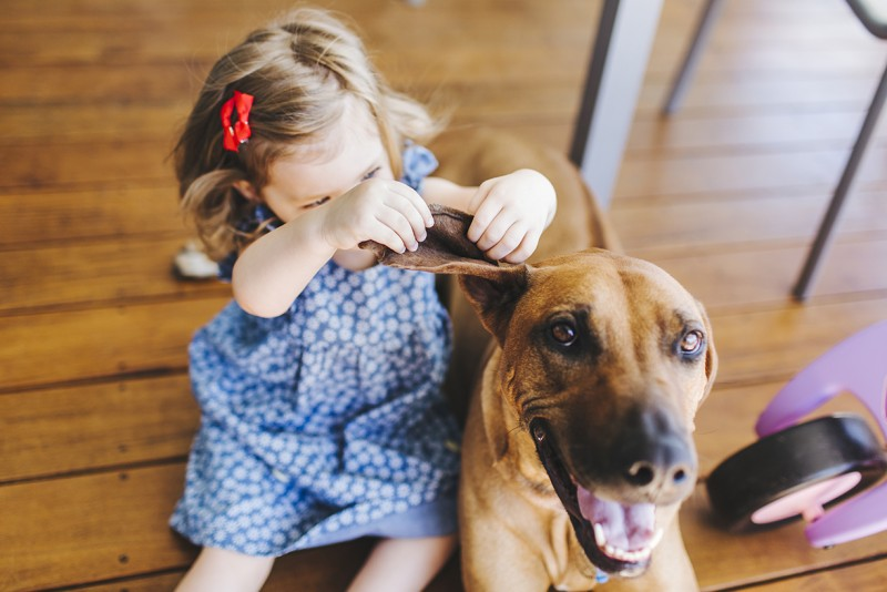 image of little girl blue dress red bows lifting dog ear by tina shawal marshall