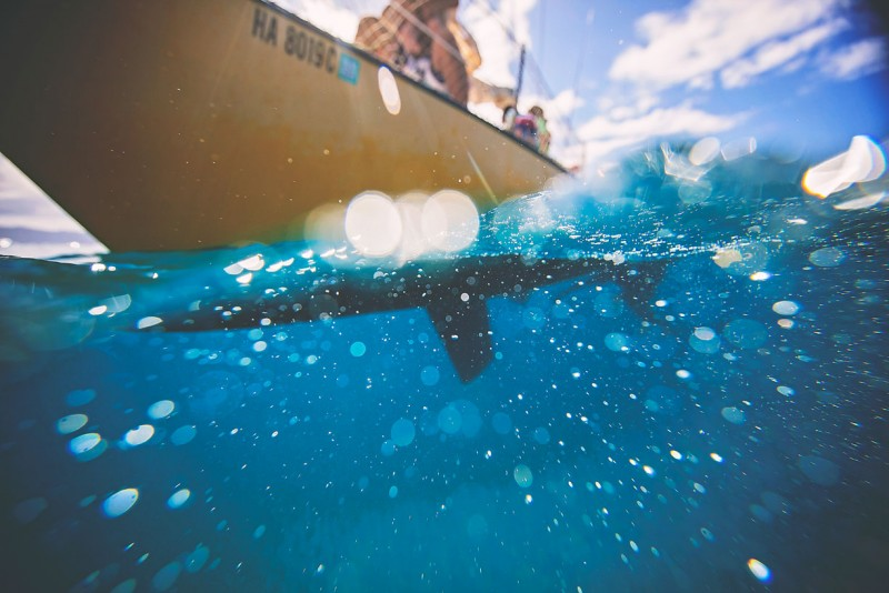 7 Partial underwater photo of sailboat in ocean by-Three-Plus-Photography