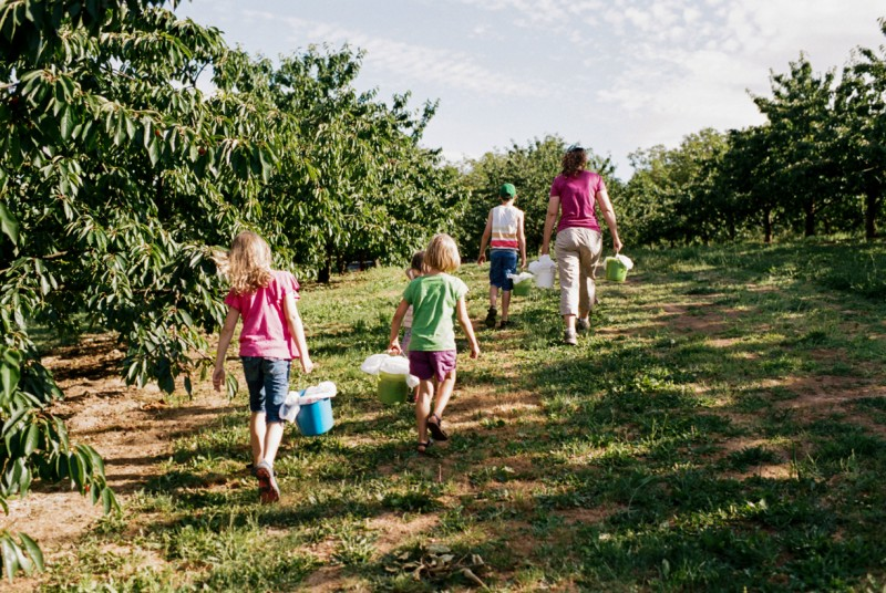 photo of family in cherry orchard with buckets of cherries by emily mccann