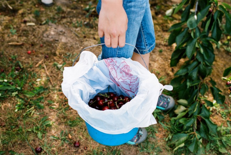 picture of person holding bucket of cherries faceless by emily mccann