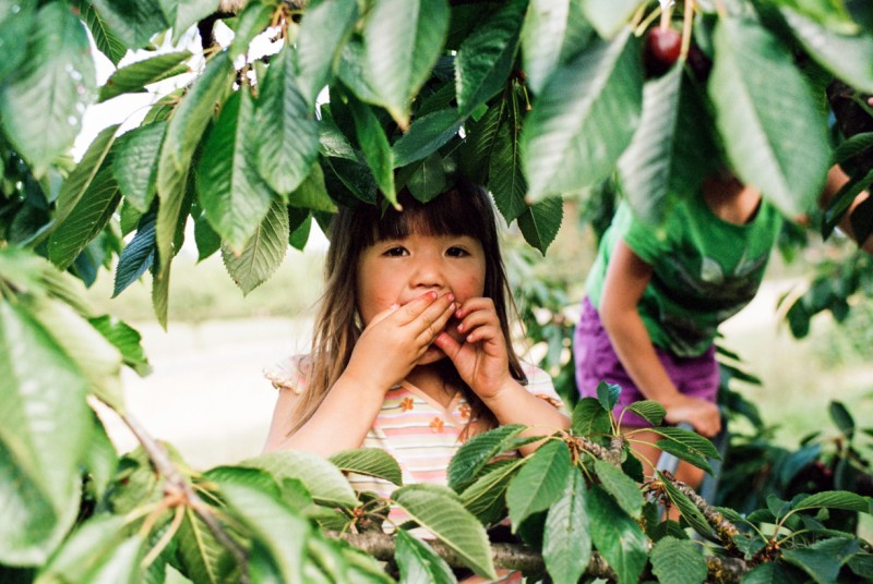 photo of young girl eating cherries surrounded by branches by emily mccann