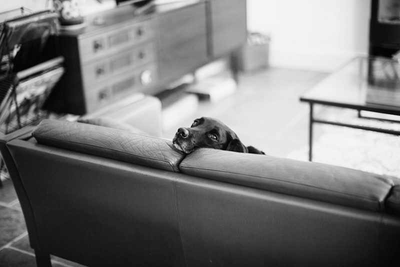 17_A dog lounges on a couch in B&W by Lili Love_Look of Love_England