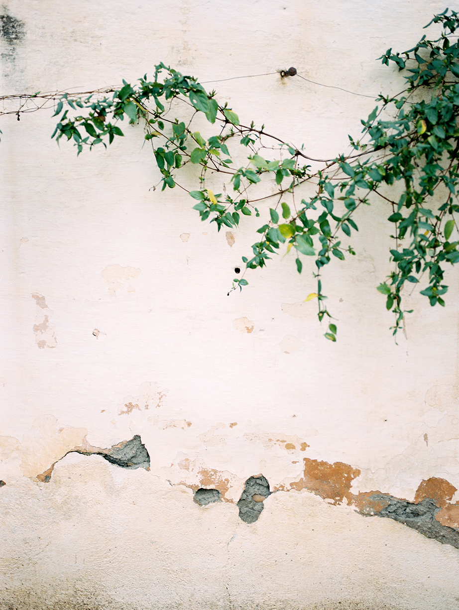 5 Vine along wall with cracked stucco in color By Jacquelyn Hayward
