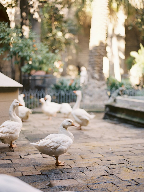 8 Ducks in cobblestone courtyard By Jacquelyn Hayward