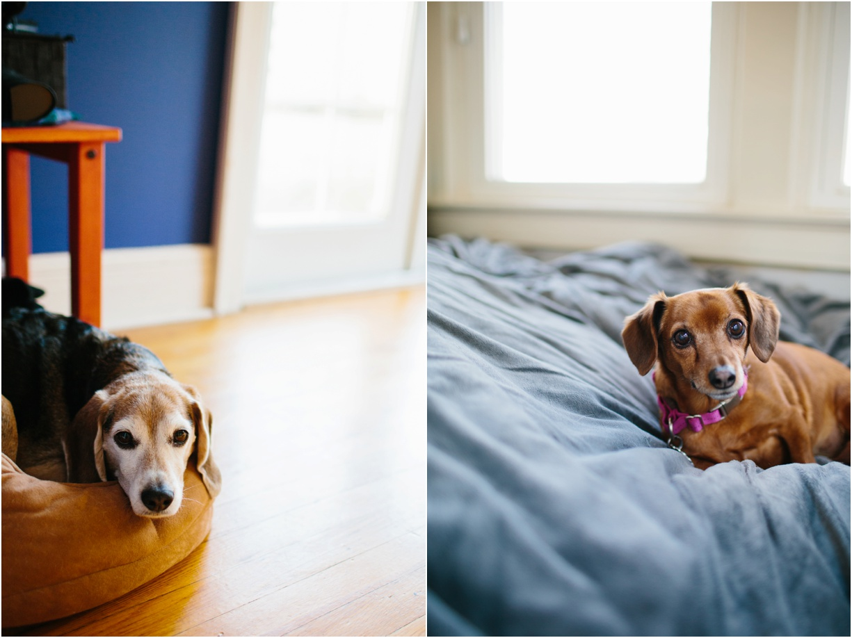 a photo of two small dogs by hudson valley photographer mikki skinner