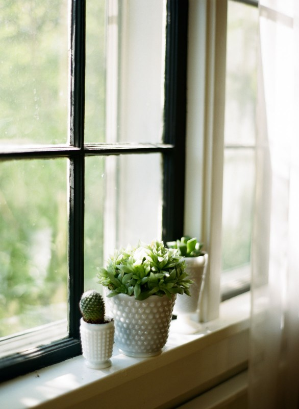 picture of plants on a window sill by Paige Gabert